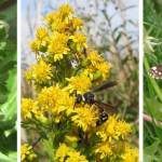 Plants That Attract Good Insects