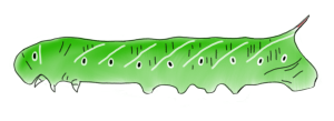 The insect cuticle: (1) multi-functionality