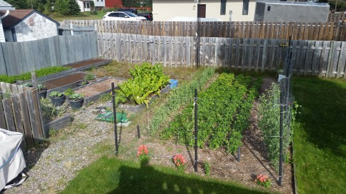 The garden in August. Things are looking lush but still a bit behind.