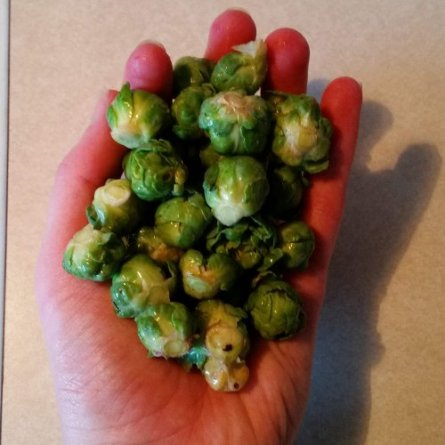 A handful of teeny tiny Brussel sprouts.