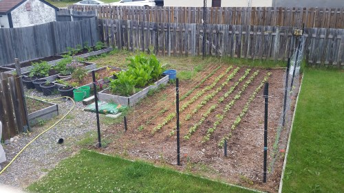 2018 garden overview: The garden in July. Finally seeing some grow.