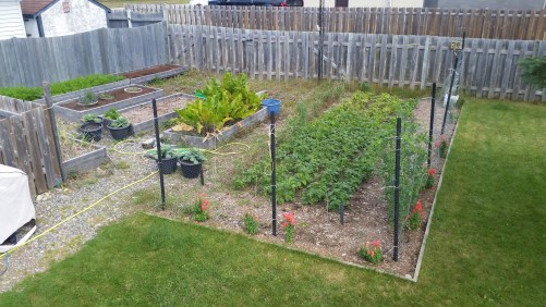 2018 garden overview: The garden in September. Some things have been harvested already, but others still need more time.