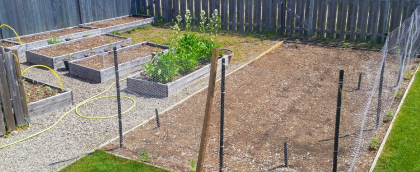 Garden update June 2019: The overall garden. Not much to see yet as most had just been seeded.