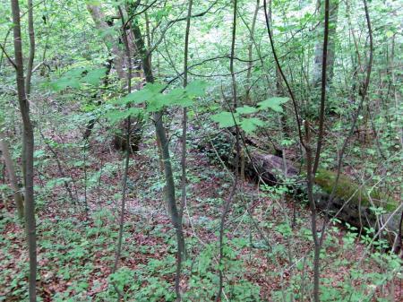 Rezerwat Bukowa Góra 04.08.2012   Biotop Ch.fimbriata