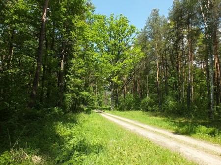 Las żeromiński. Leśna aleja dębowa - siedlisko gatunku