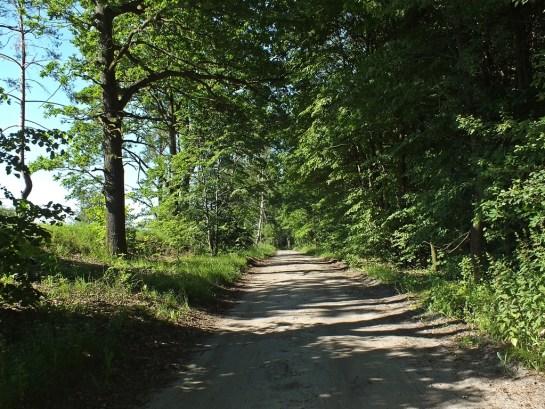 Przyleśna droga, nad którą zawisały terytorialne samce