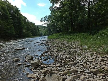 Potok Wołosaty - Biotop
