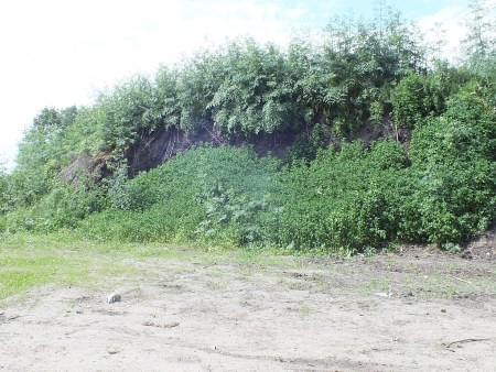 04.06.2015 Skarpa w czerwcu jest już niemal w całości pokryta bujną roślinnością