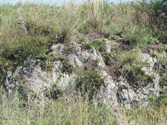 E.cinnaberrinus habitat