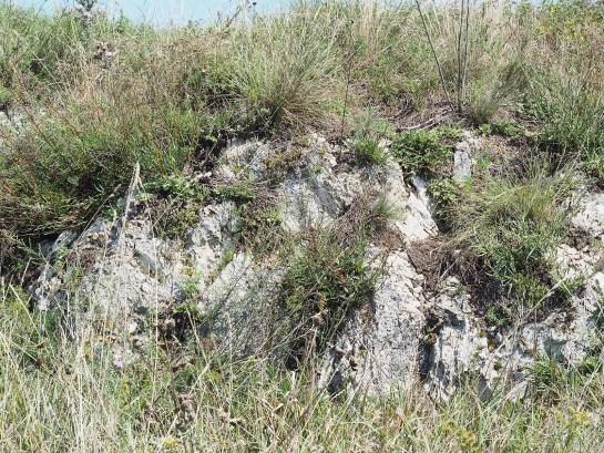 Eresus habitat