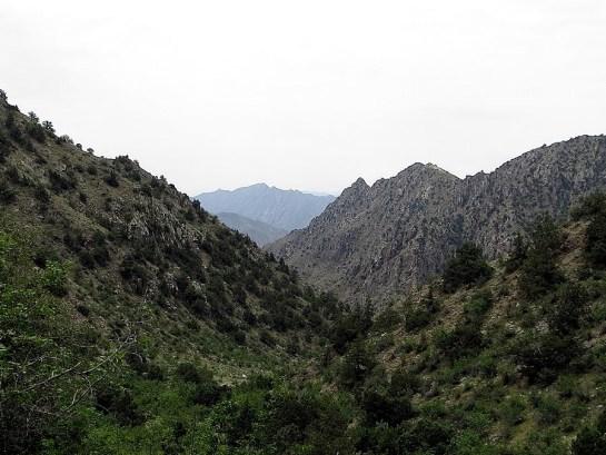 A. agababiani habitat