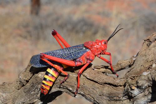 Von Kapstadt nach Kasane. Eine naturkundliche Reise durch Südafrika und Botswana