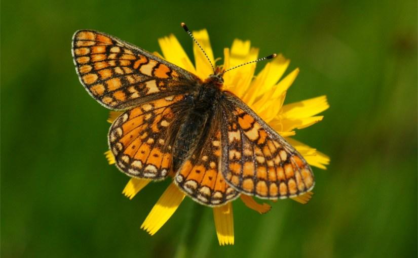 Der EVB am Festival der Schmetterlinge