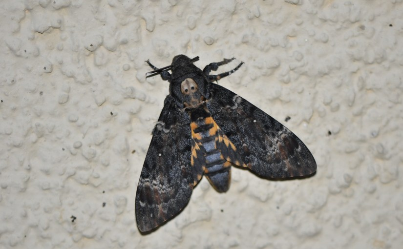 Nacht der Fledermäuse in Stettlen am Samstag 25.08.18: Vortrag über Nachtfalter von Martin Albrecht