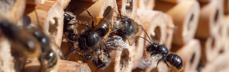 Gäste im Insektenhotel