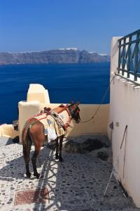 donkey in Santorini, Greece
