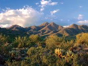 McDowell Mountains. - Foto: Scottsdale Convention and Visitors Bureau (SCVB)