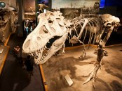 Im Royal Tyrrell Museum sind die Dinos los. - Foto: Canadian Tourism Commission
