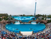 Orca Encounter in SeaWorld San Diego. - Foto: SeaWorld