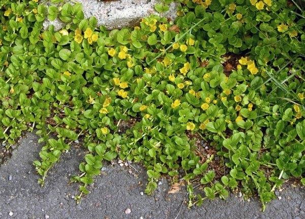 Подвесные цветы: ампельные растения в оформлении ...