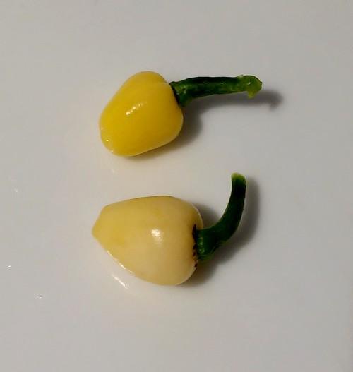 jellybean-yellow-fire-chilli-pepper-piment