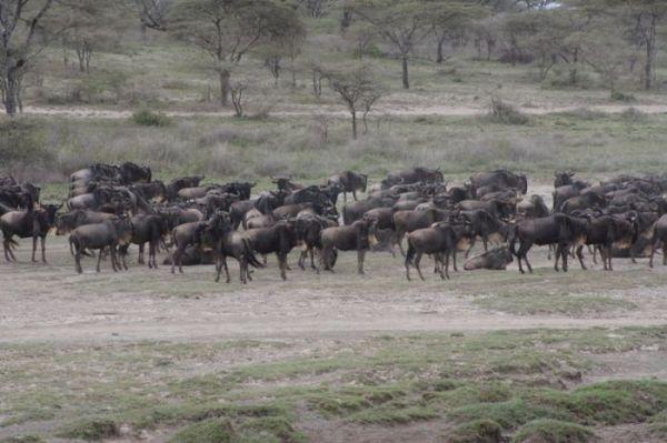 7 Nights - 8 Days Manyara Serengeti Ngorongoro Tarangire