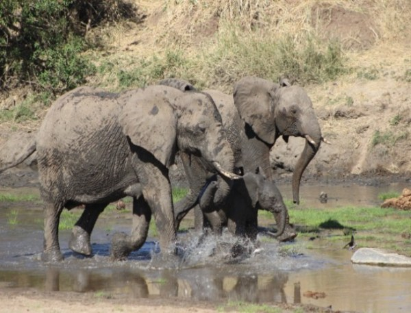 1 Night/2 Day Lake Manyara National Park