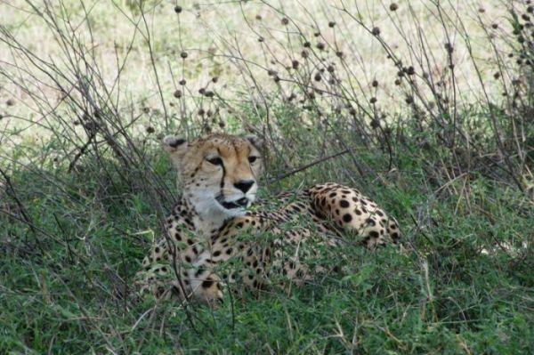 Safari & Zanzibar – 7 Nights/ 8 Days Safari to Manyara/Ngorongoro/Serengeti/ Zanzibar