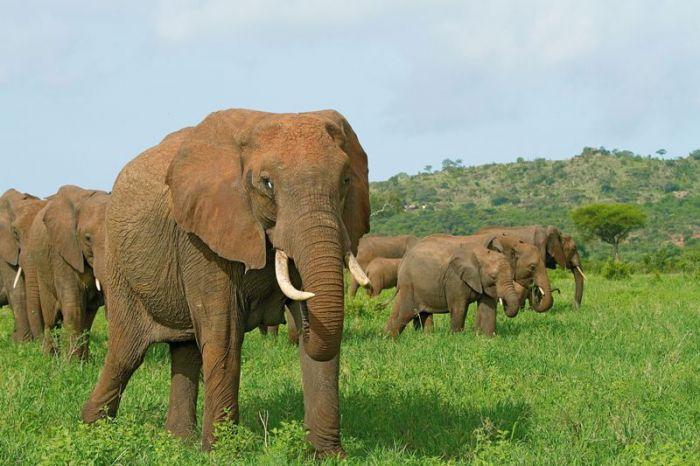 tarangire-national-park Tanzania