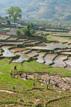 Rice paddies in the highlands