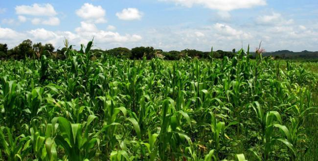 US Flags Off Private Agric Partnership In Nigeria