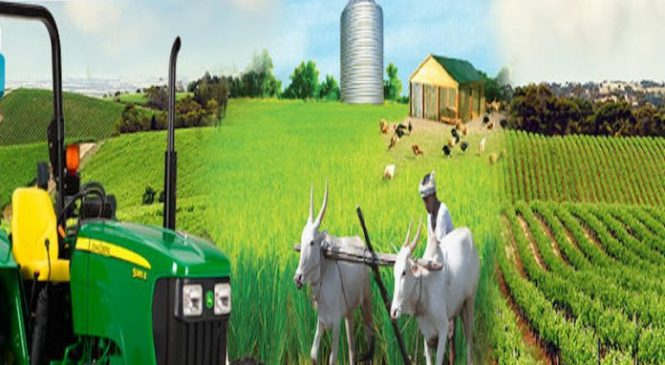 Reviving Nigeria's Agricultural Sector