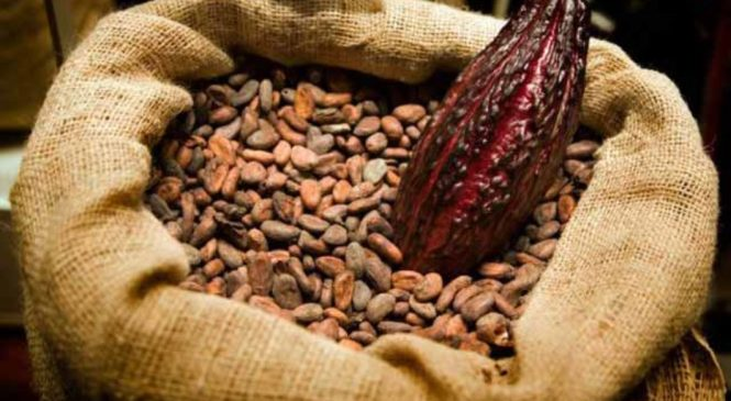 84,000 Lose Jobs as 16 Cocoa Companies Go Under