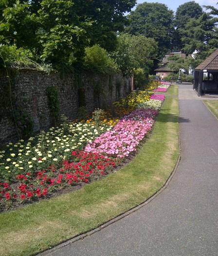 Haling Grove: in full summer bloom