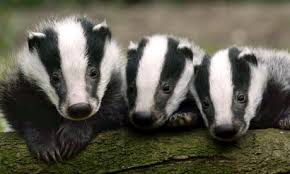 Will these fine fellows cause plans for a school on playing fields to be stopped?