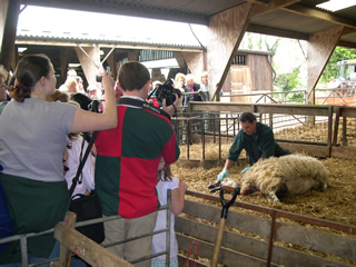 There's free entry to Shabden Park Farm on Saturday for the annual Lambing Open Day