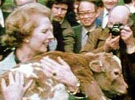 Thatcher with calf