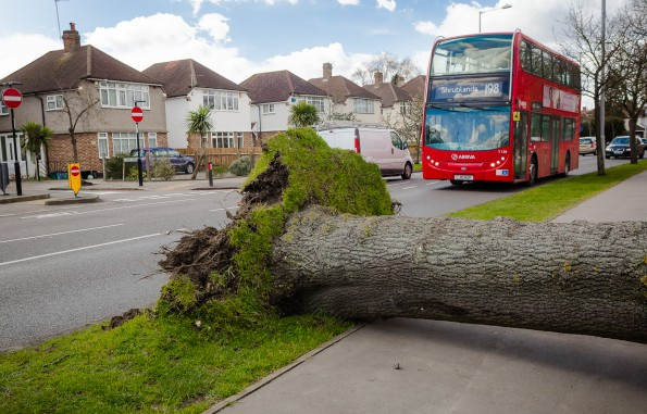 Wickham Road had a fortunate escape when the tree fell away from the road. Photograph by Lee Townsend