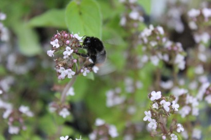 Busy time: Croydon's Bee Haven needs help urgently. Photo by Ally McKinlay