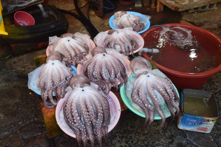 Alle soorten vis op Jagalchi Market