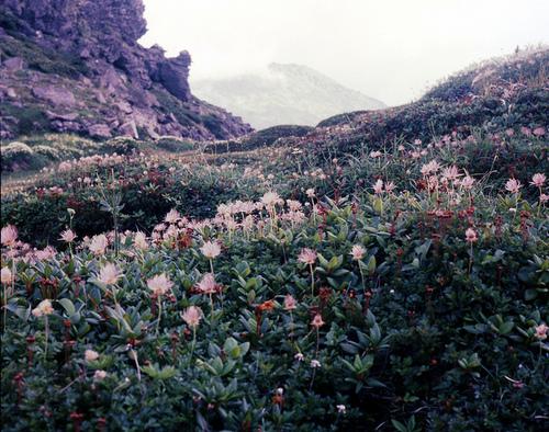 flowers-mountain-Favim.com-1001520