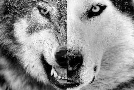 aggressive-animal-dog-nature-Favim.com-817414