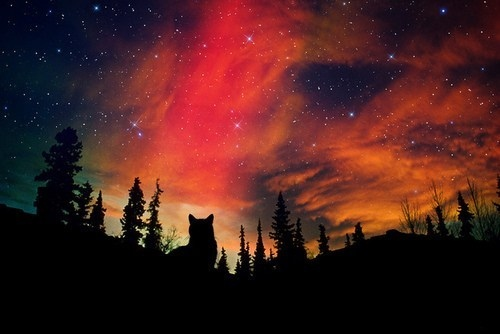 tumblr_static_aurora-borealis-beautiful-forest-northern-lights-sky-wolf-favim.com-58629