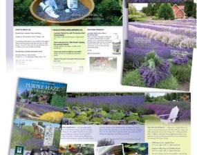 Purple Haze Lavender print design