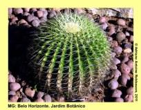 adrianoantoine_mg_bh_jardim_botanico_0010