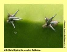 adrianoantoine_mg_bh_jardim_botanico_0018