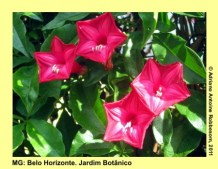 adrianoantoine_mg_bh_jardim_botanico_0020