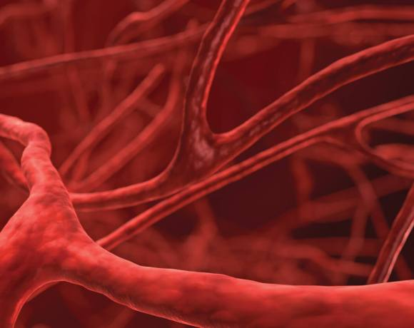 Getting Started With In Vitro Blood Vessel Research Insidescientific