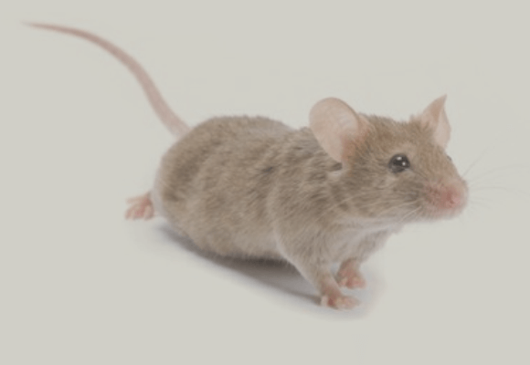 Examining New Research Capabilities and Technology for Preclinical Telemetry in Rodents