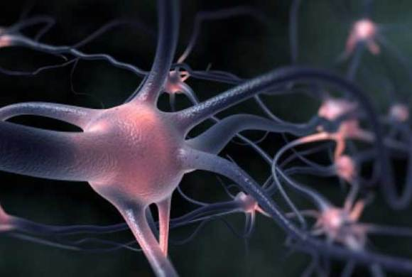 In Vivo Research Approaches in the Study of Neurological Disease and Psychiatric Disorders